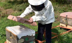 propolis, polen, arı sütü, arı ekmeği